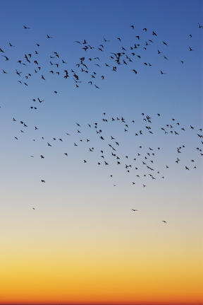 birds-at-sunrise