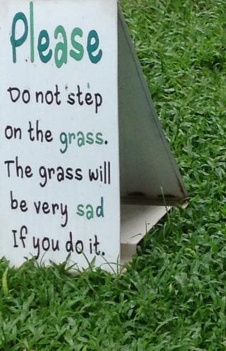 grasspic1